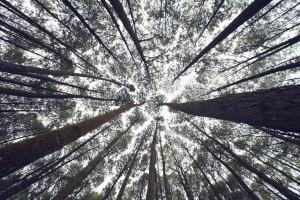 trees-768626_1920